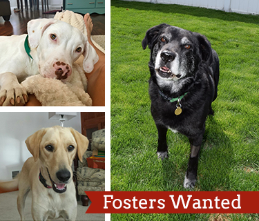 fosters-wanted